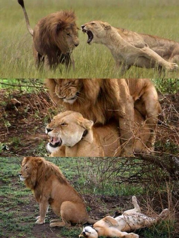 Comment calmer une femme, mddddr. :3