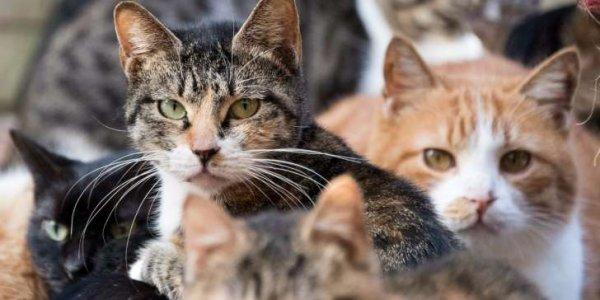 Dans le squat d'un SDF, des dizaines de chats séquestrés, maltraités ou décapités