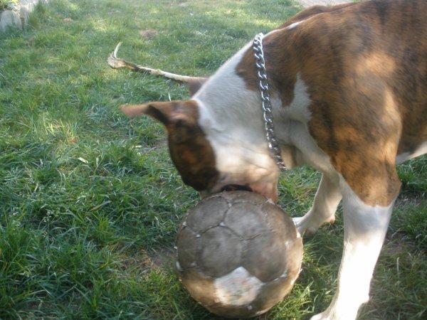 le 15/avr/2011 (BOLO/age 2ans)34kg