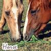 Story-horsedrem