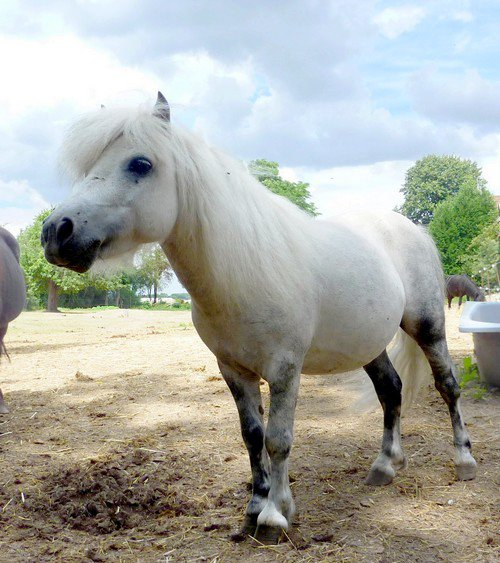 Photos des chevaux et des poon's !!