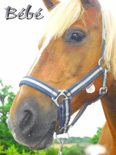 Le cheval t'apporte ce que l'être humain est incapable de te donner ♥