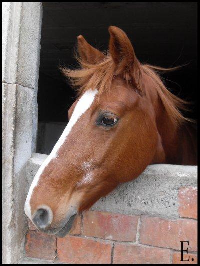 « L'air du paradis est celui qui souffle entre les oreilles d'un cheval  ».