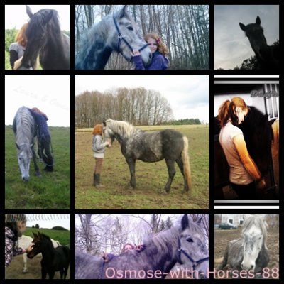 Welcome in Osmose-with-Horses-88 ♥