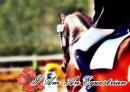 Photo de I-Am-An-Equestrian
