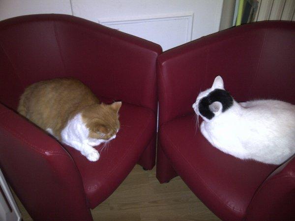 Pour Mes Ti chats - Choupette et Coocci  - Poème