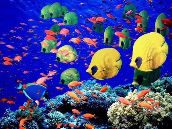 Les Merveilles des mers tropicales - Citation - Poésie