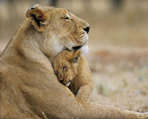 """Peu importe Le """"Bébé"""". . . Peu Importe l'âge du """"Bébé"""". . . Nous avons tous besoin de notre maman. . ."""