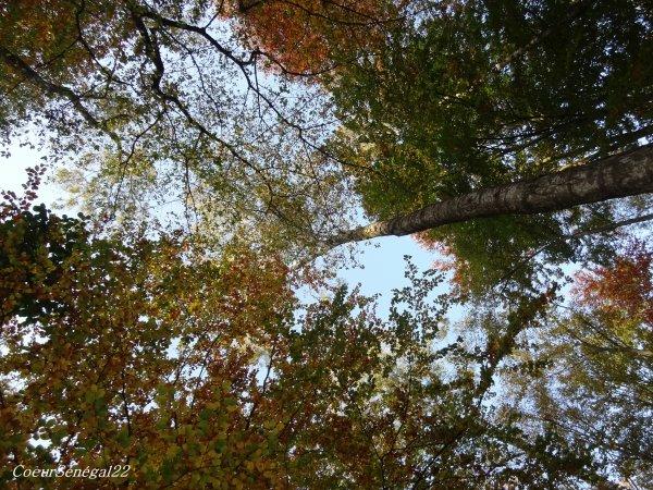 Le murmure de la forêt - Poème - C♥eurSénégal22 –  4 novembre 2012