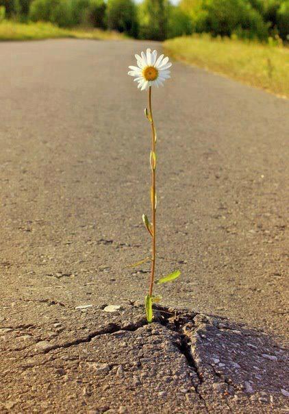 La fleur ... à méditer...