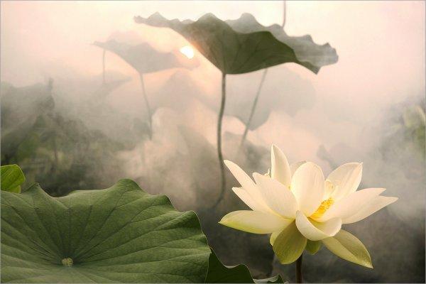 Love. . .Comme une belle fleur assise entre les fleurs - Pierre Ronsard
