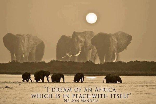 Peace Africa