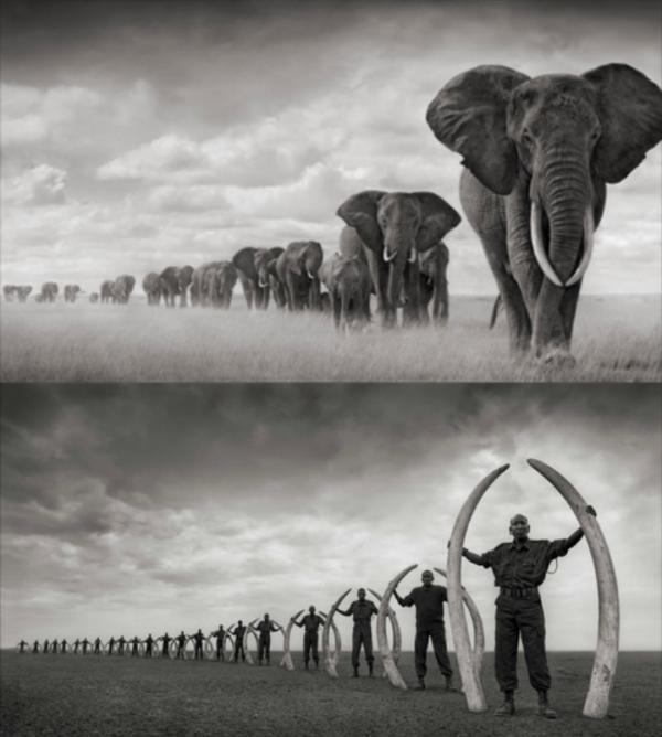 L'éléphant.... Préservons-le !