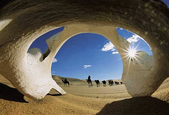 Great desert life. . . Superbe désert de vie. . . Citations en images