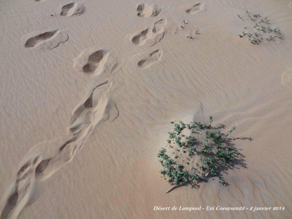 Le désert........ de Lompoul