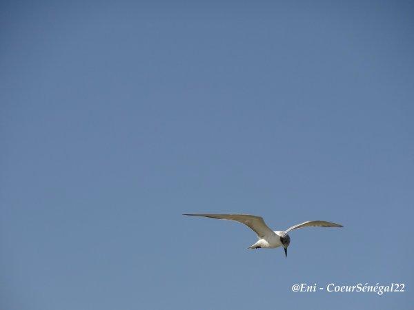 Les oiseaux du Parc National de Djoudj - Sénégal - Vidéo et Photos CoeurSénégal22