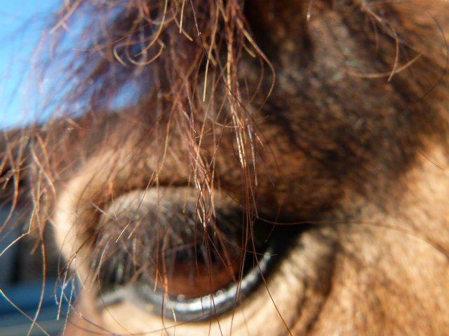 ma vie c'est les chevaux !
