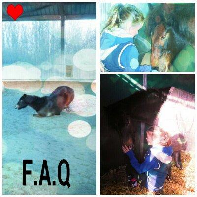 F.A.Q √