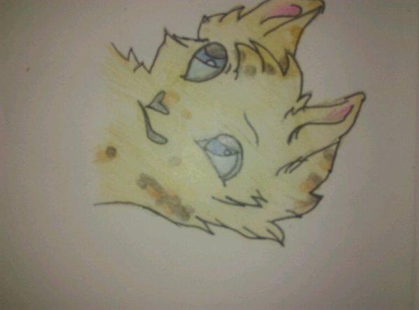 Dessin #3 ---->Étoile du léopard