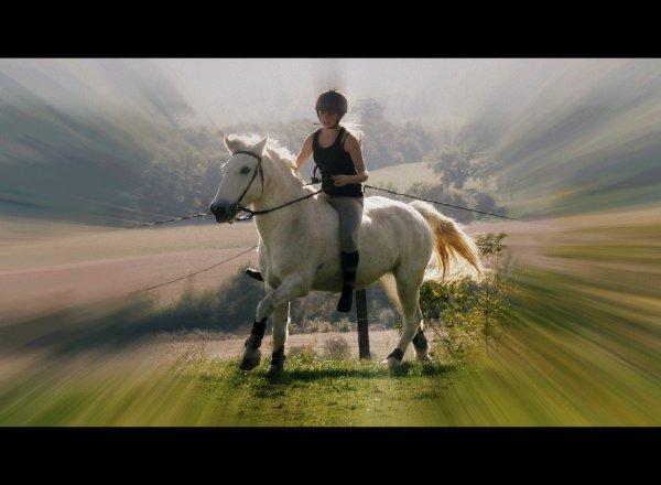 « De toute façon les chevaux, Ils ont le même problème que les gens : ils meurent. »