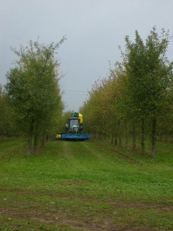Ramassage de pommes 2010