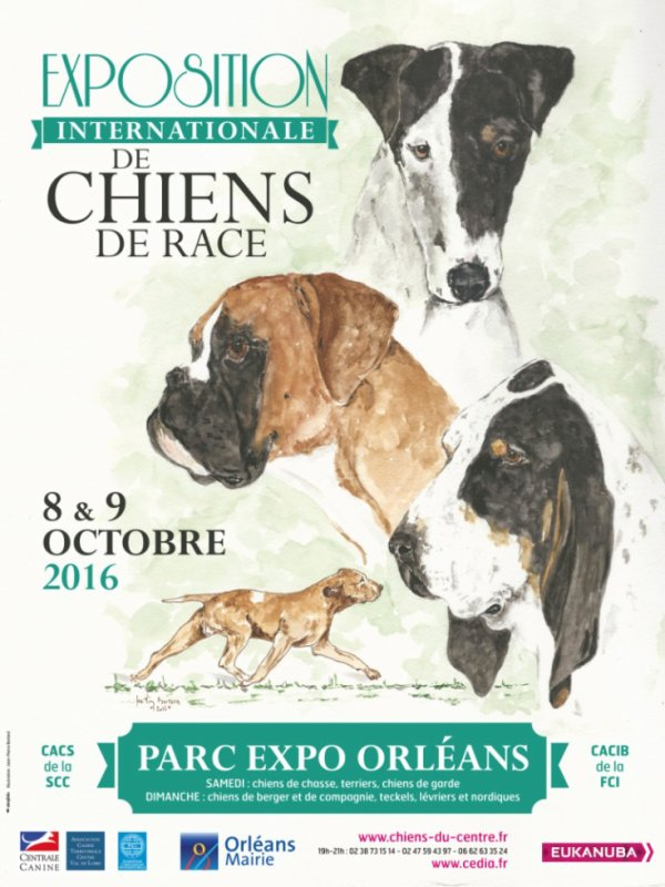 EXPOSITION INTERNATIONALE DE CHIENS DE RACE 2016