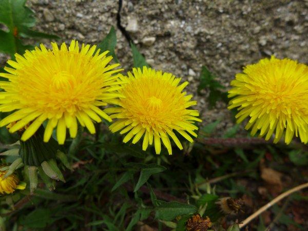 Juste un petit coucou et à tout bientôt! Voici quelques fleurs du printemps 2016!
