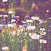 La solitude est un jardin où l'âme se dessèche, les fleurs qui y poussent n'ont pas de parfum