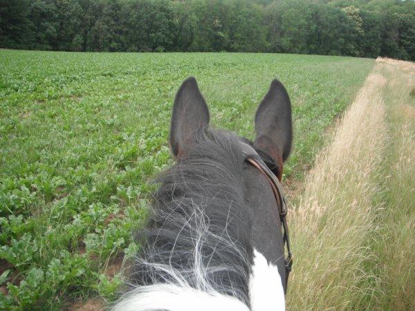 Mon petit chevale