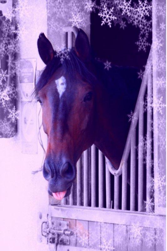 Lorsqu'un cheval vous emmène au pays des rêves <3