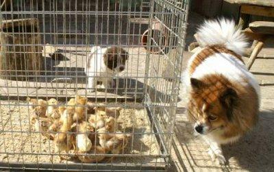 Elos und andere Haustiere