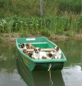 Elo Welpen im Boot