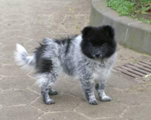 Elo - ein kinderfreundlicher Hund
