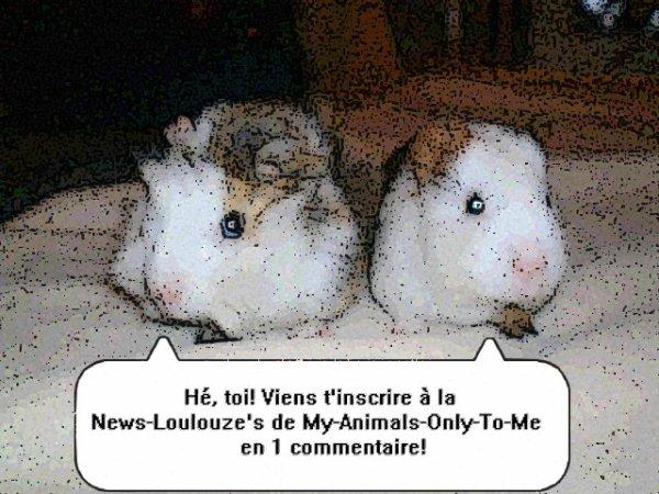 News LouLouZe's ♥.