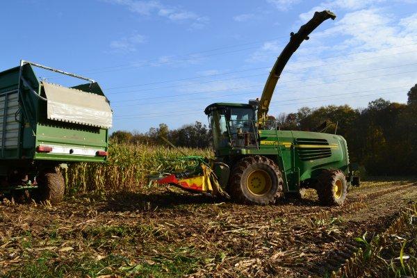 Lambotte a l ensilage de maïs 2012!