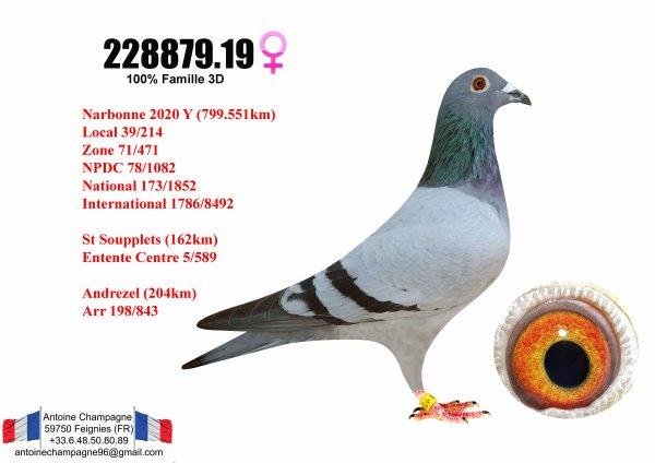 1ère Yearling arrivée Narbonne 2020