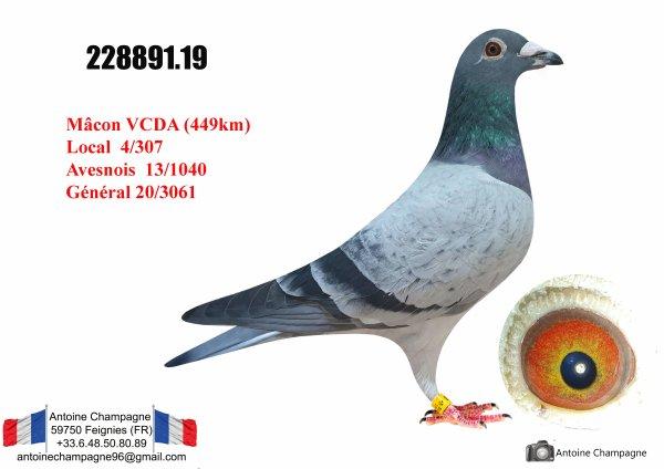 20e VCDA Yearlings Mâcon 2020