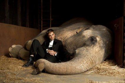 DE L'EAU POUR LES ELEPHANTS