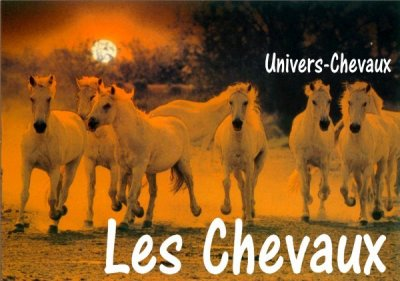 Les Chevaux.