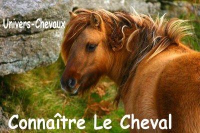 Connaître Le Cheval.