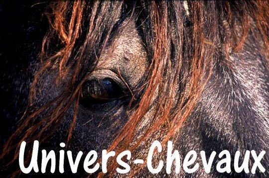 Univers-Chevaux