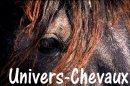 Photo de Univers-Chevaux