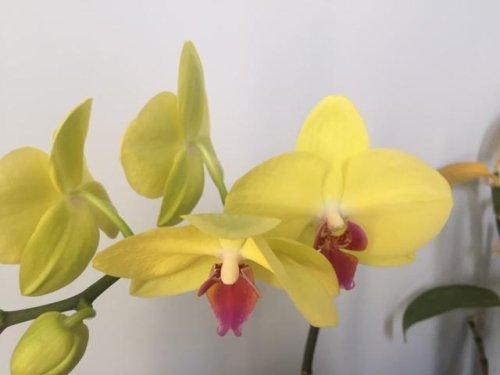 Orchidée...