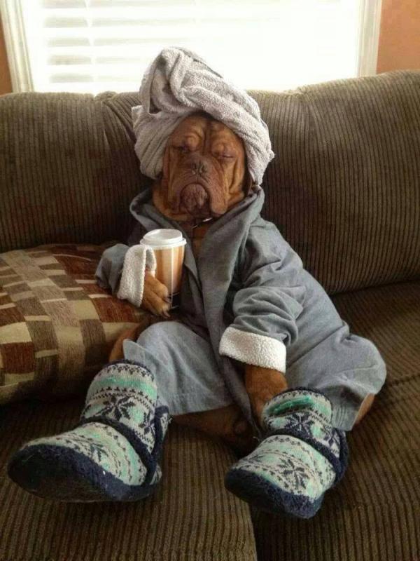 Attention ... mon chien à la grippe !.....