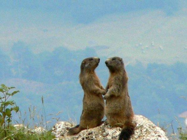 Aujourd'hui c'est le jour de la marmotte !