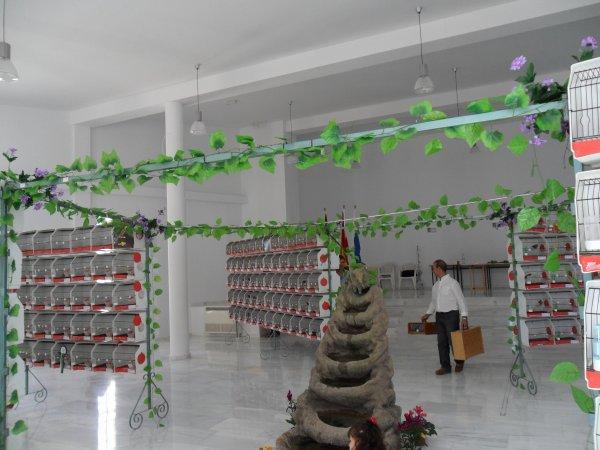 XI MONOGRÁFICO NACIONAL DEL CANARIO LIZARD.-