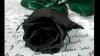 hoooo belle fleur