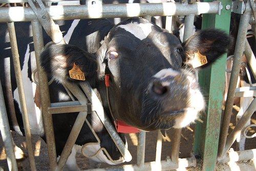 Blog de agriculture-12