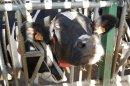 Photo de agriculture-12