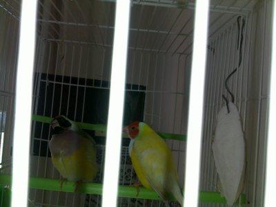ajout de nid et changement de cage